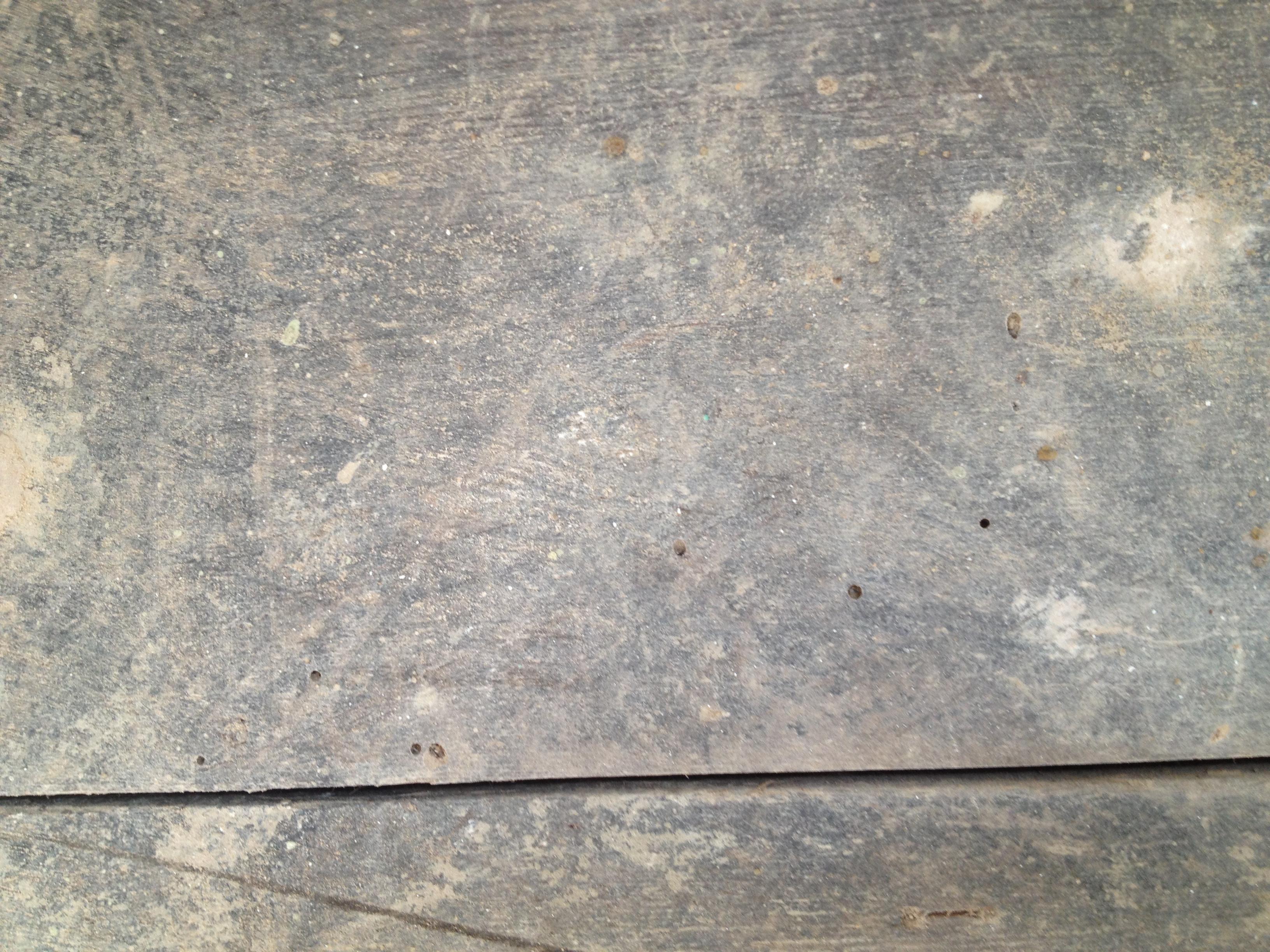 woodworm exit holes