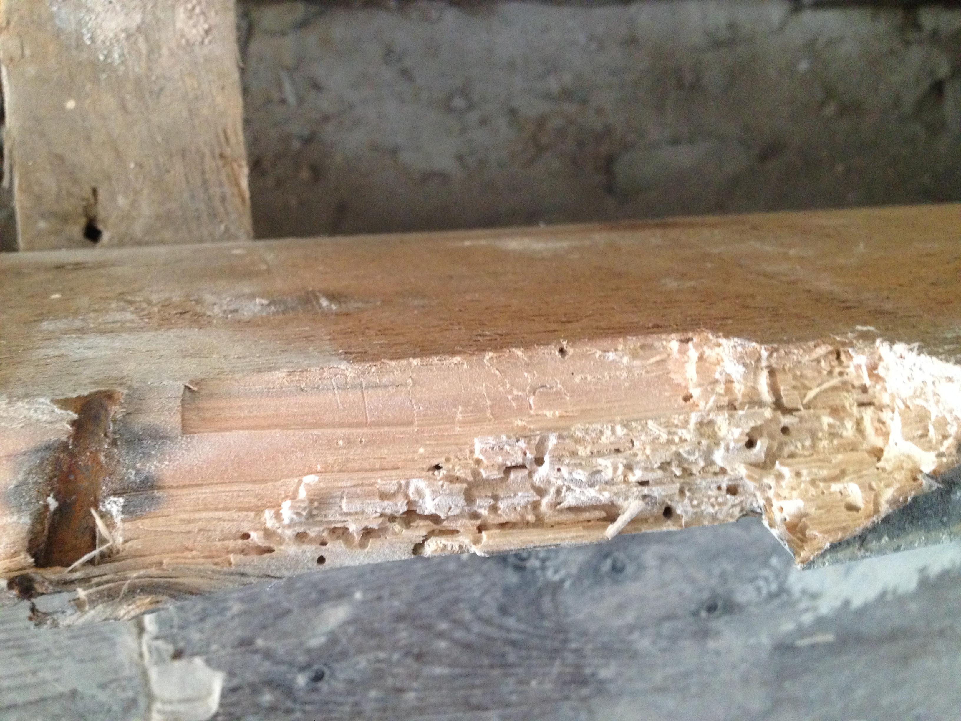 woodworm frass